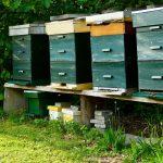 Waga pszczela i znaczenie ważenia uli