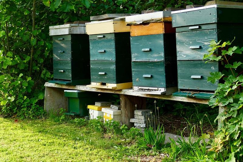 Waga pszczela